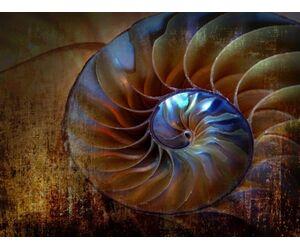 Abstract shell ALU